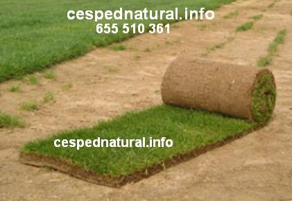 Jardines p blicos archivos c sped natural for Tepes de cesped baratos