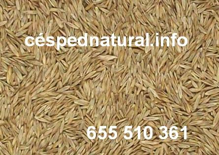 Semillas de césped natural