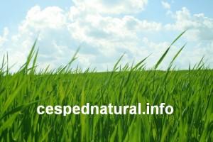 Conoce las ventajas del césped natural