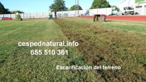Aireación y escarificación del terreno