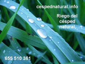 Riego del césped natural