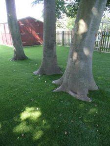 Césped con árboles