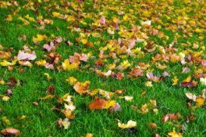 Césped y hojas secas