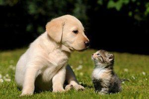 Césped para perros y gatos